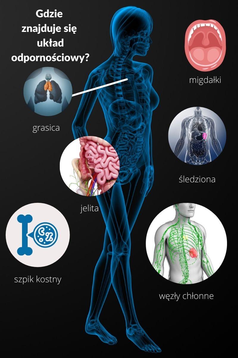 układ odpornościowy