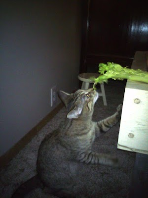 How Can I Safely Give Celery To My Cat