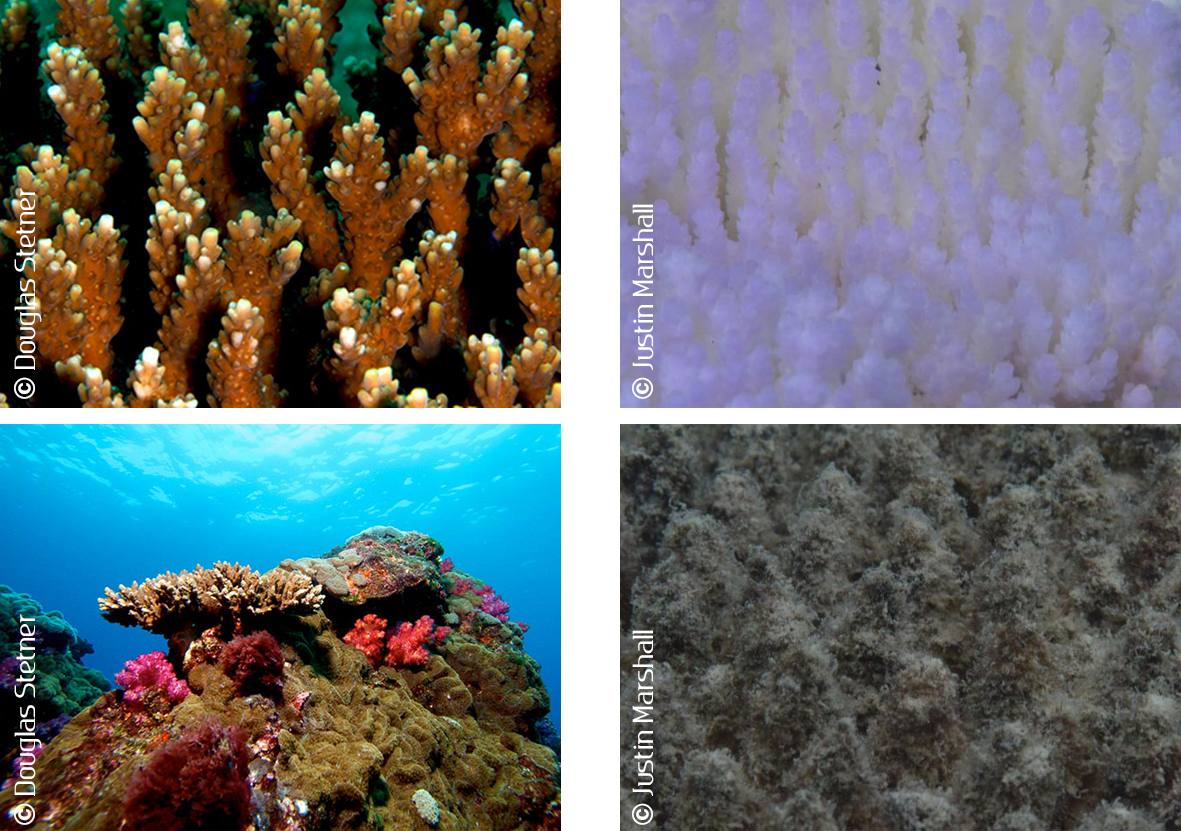 Coral pictures