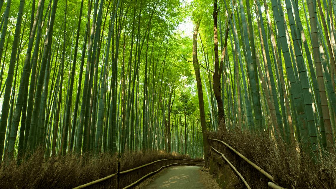 Arashiyama's bamboo grove, Kyoto, Japan