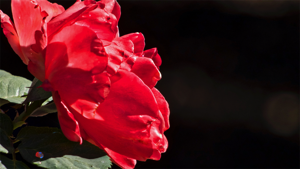 Red w Sparkle.jpg