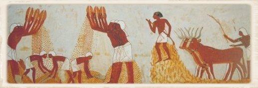 mietitura del grano nell'antico Egitto