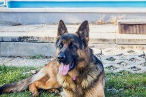 https://dogsrecommend.com/a536152418/wp-content/uploads/2018/11/pexels-photo-342214-300x200.jpeg