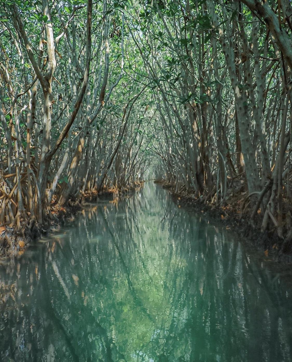 Ojo de agua Dzilam de Bravo, Yucatan
