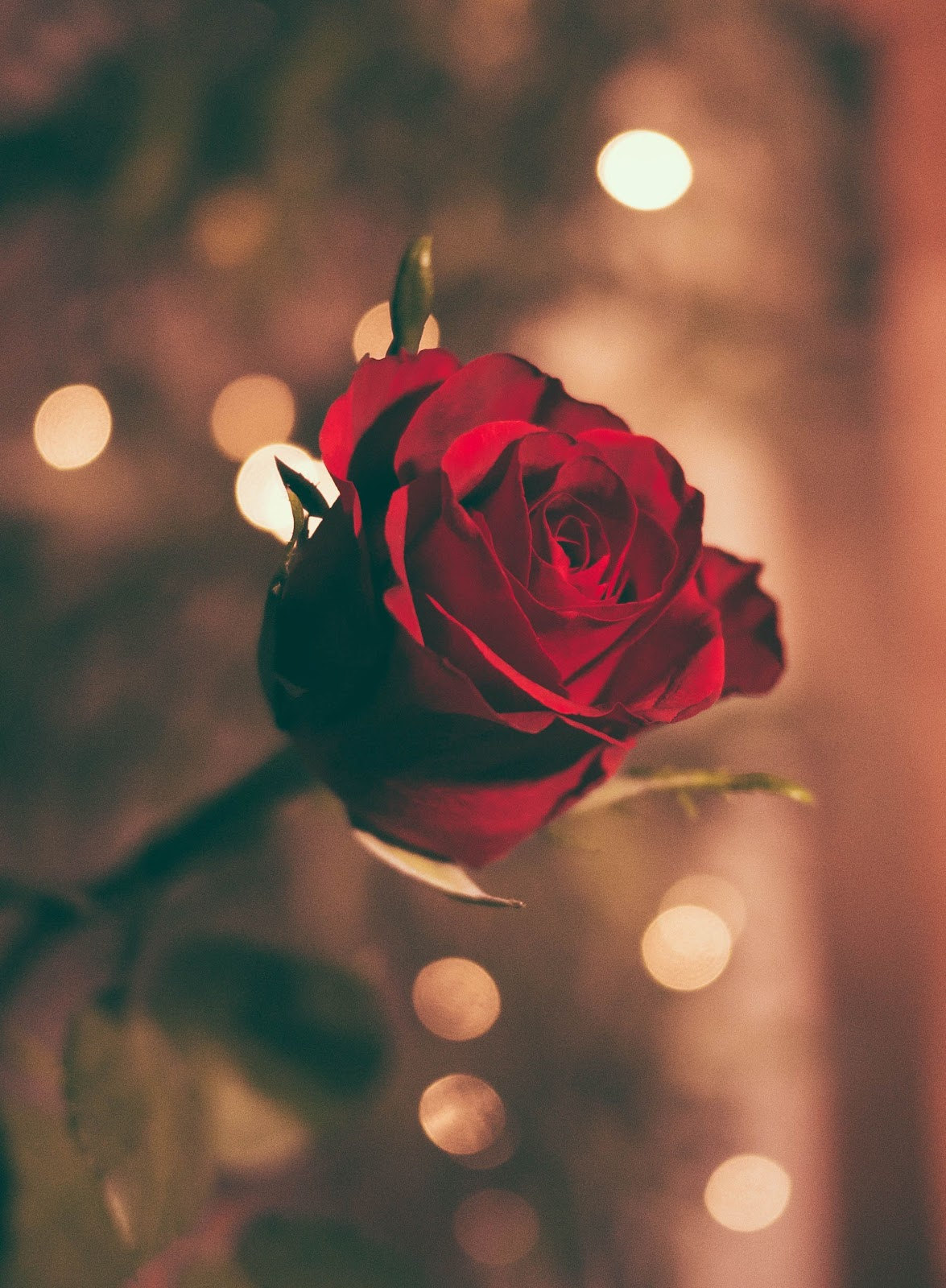 How To Buy The Best Valentine S Day Flowers Florists Tips