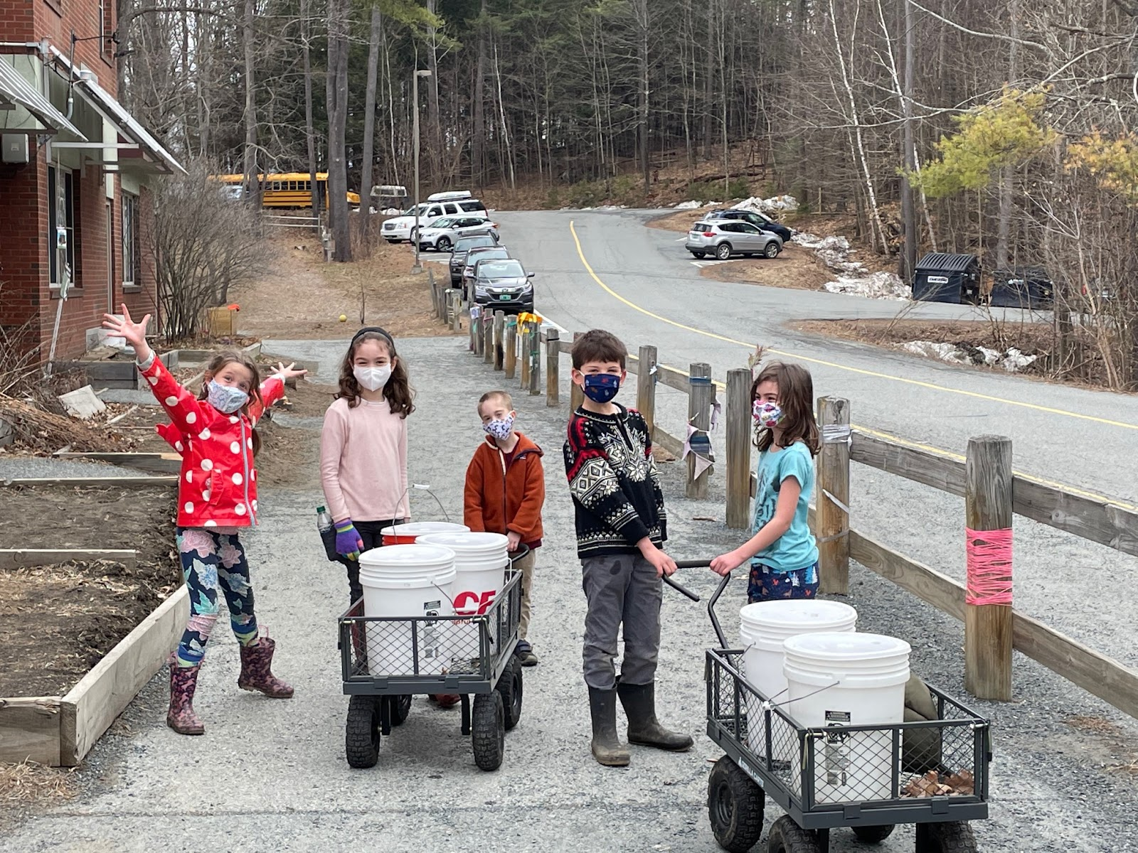 students pulling sap buckets in wagons for sugaring