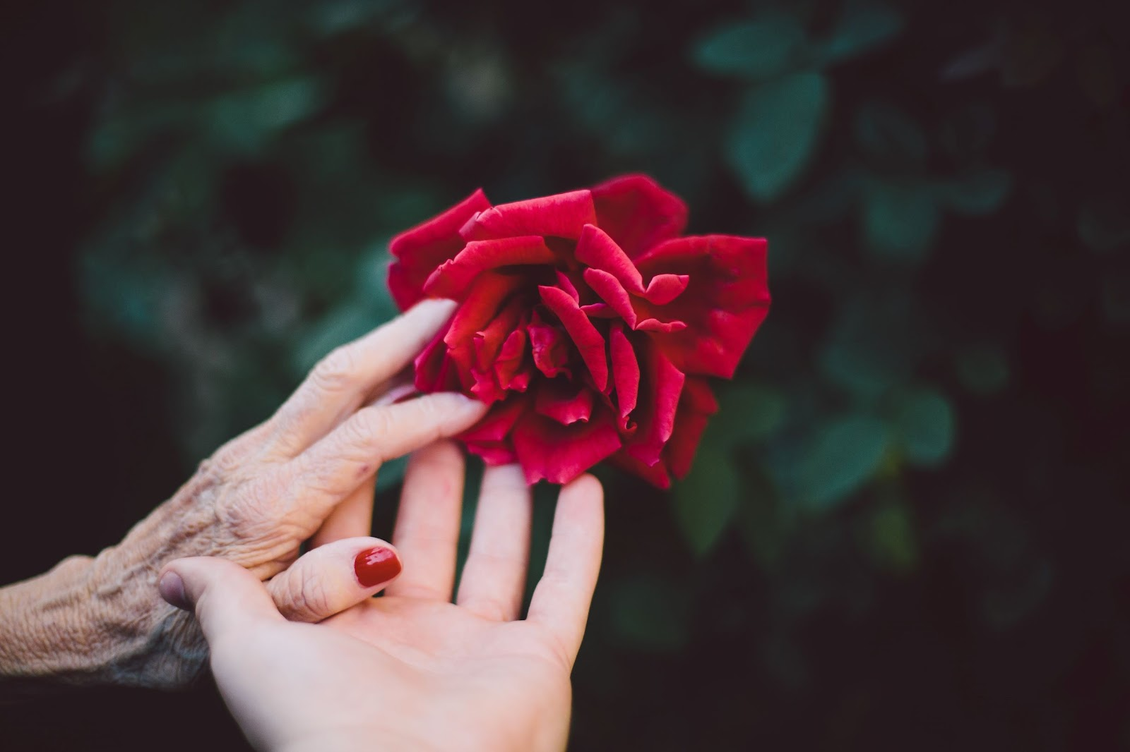 Two hands from two different people touching a flower