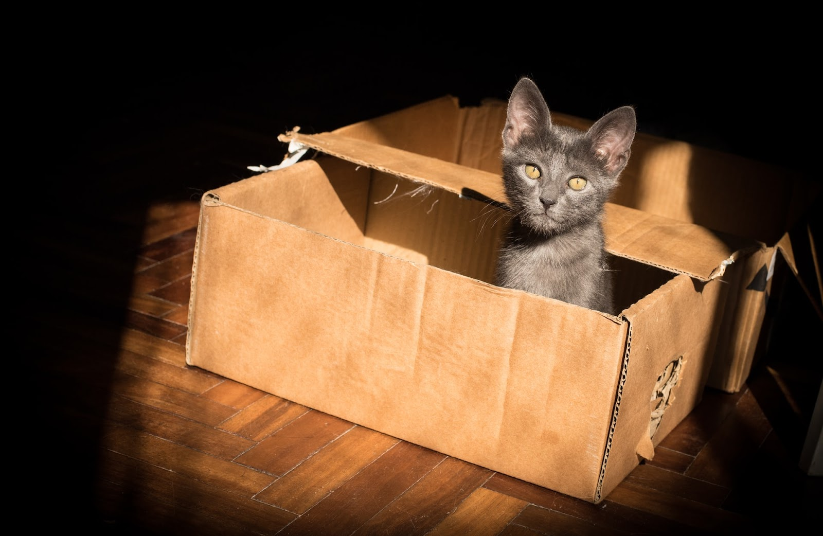 7 reasons cat chew and destroy cardboard boxes