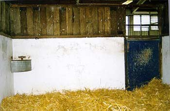 Straw used for bedding may be a source of dust and other airway irritants in a horse's environment.