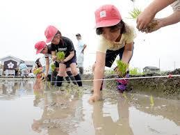 東日本大震災耐えた「奇跡の復興米」大阪で田植え - 産経ニュース