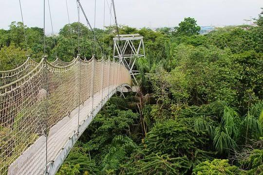 image result for the canopy walk in Lagos.