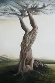 Image result for tane mahuta