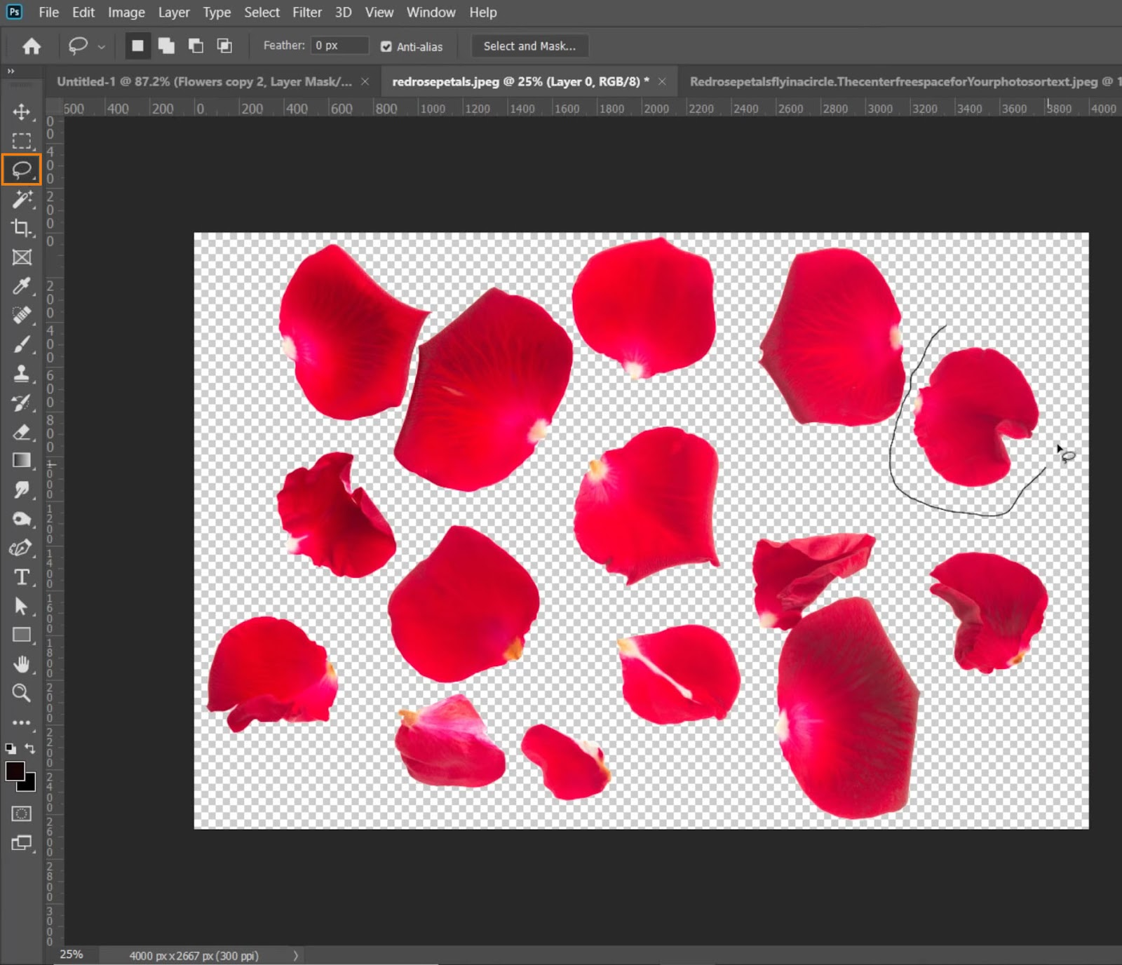 Use the Lasso tool to freehand an outline around a rose petal