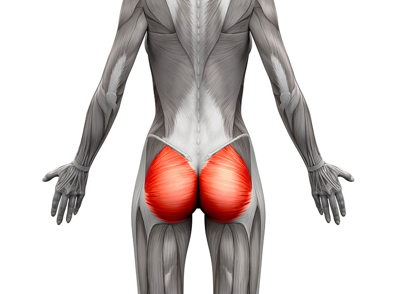 The glutes are a strong group of three muscles that work to drive leg and core power