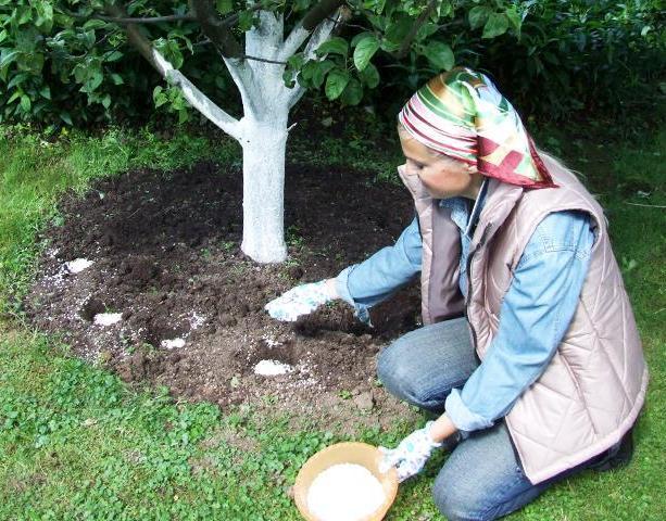 Подкормка плодовых деревьев летом