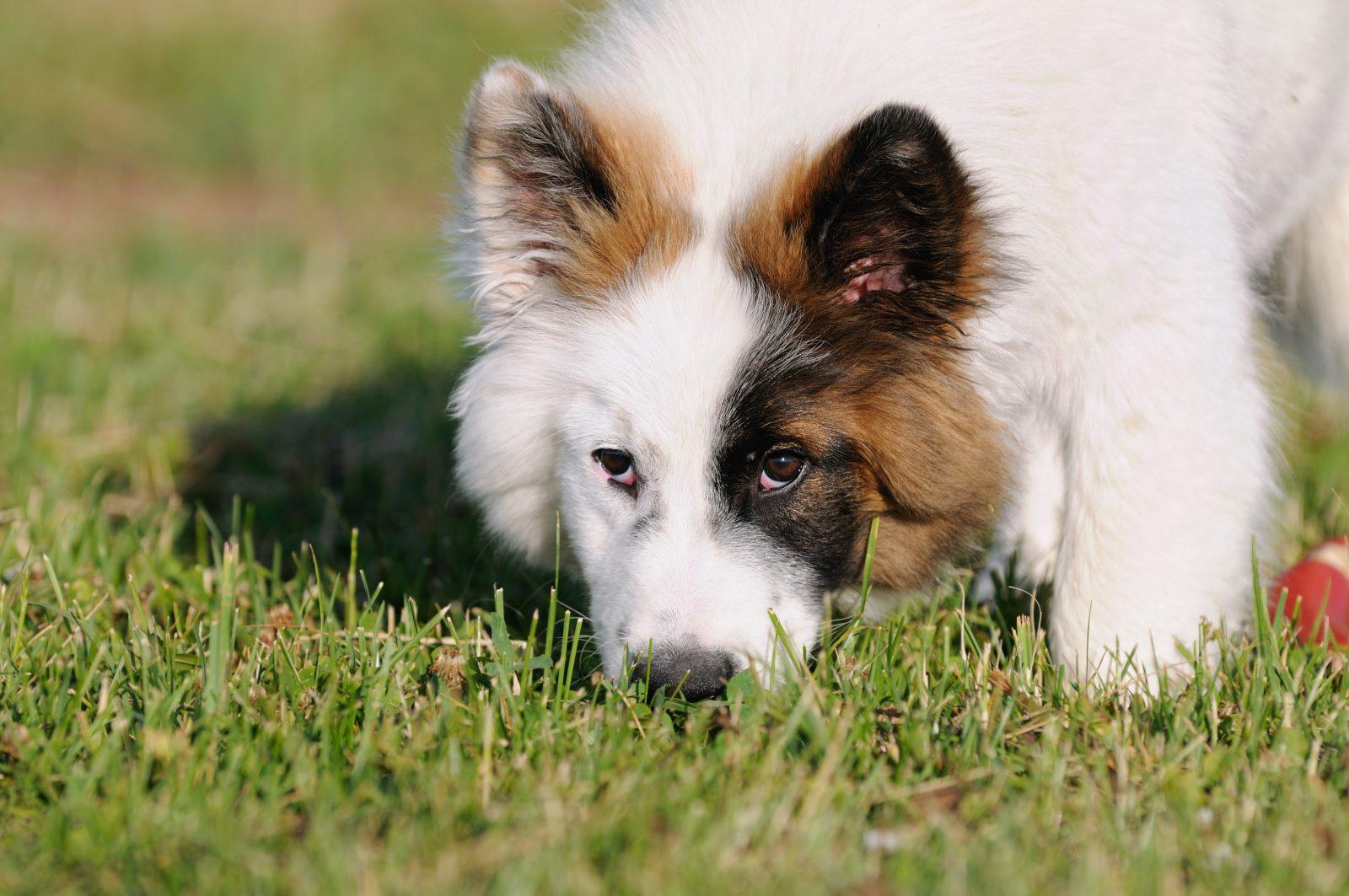 Saiba a razão para comportamentos bizarros dos cachorros