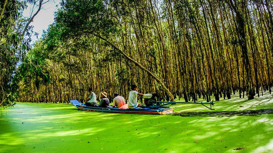 Rừng tràm Trà Sư - Tuyệt cảnh mùa nước nổi miền Tây - BongTrip.vn