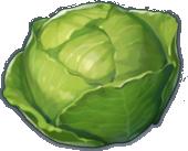 Bắp Cải Cuộn - Cabbage
