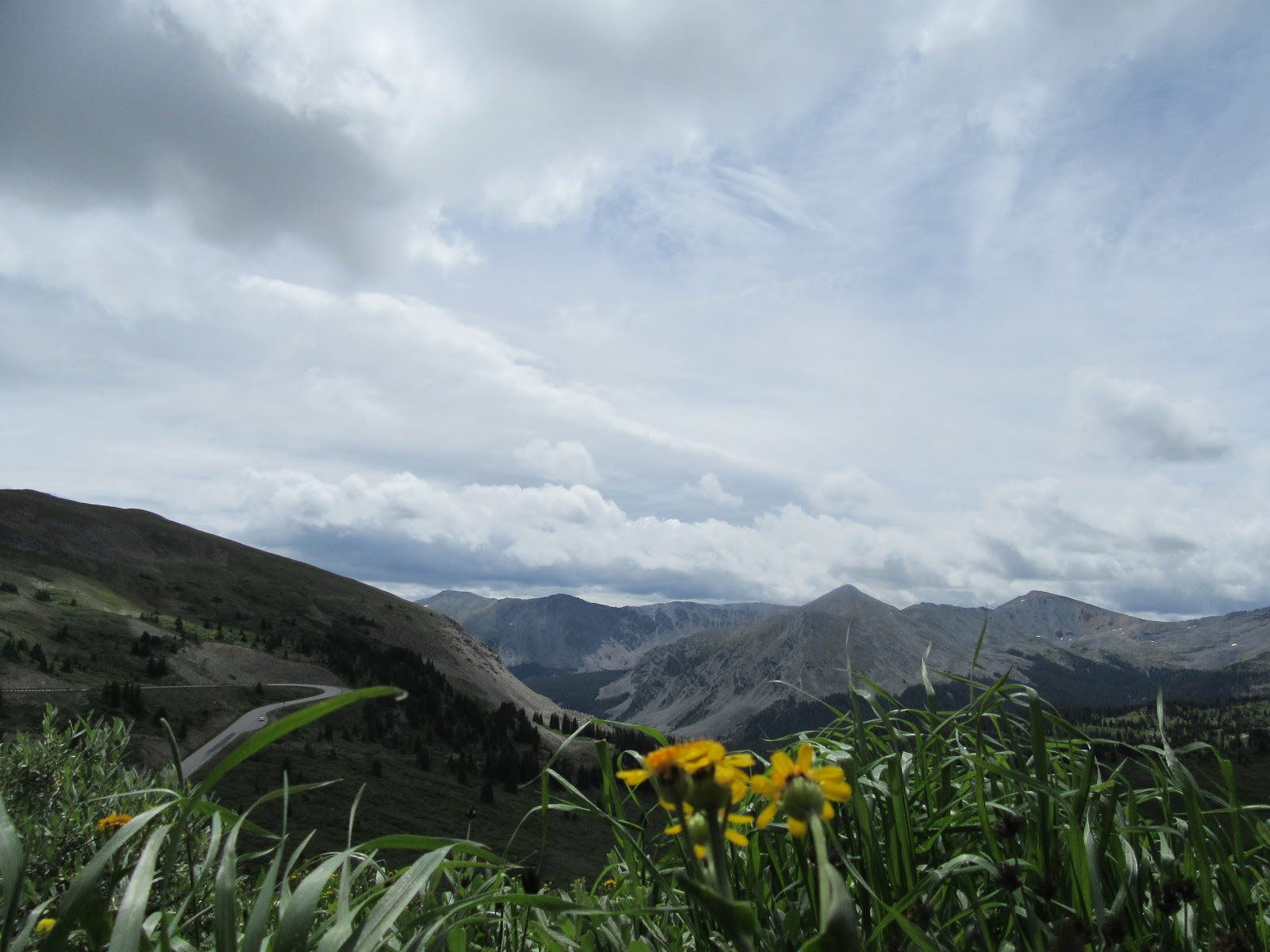 Bicycling Cottonwood Pass - view past flowers to mountains at the top