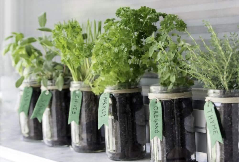 The Best Alternatives to Rosemary