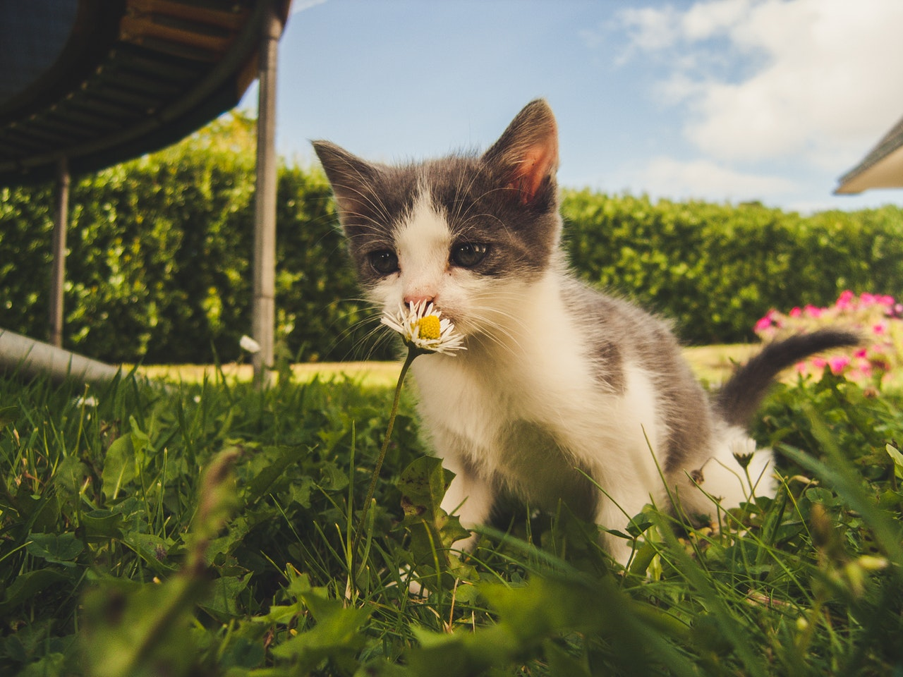 """Cat perceiving a flower   14 Simple Steps to Finally Get Rid of """"an Animal Lives Here"""" smell."""