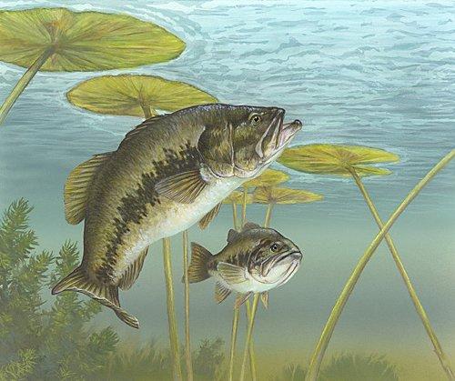 Largemouth bass.