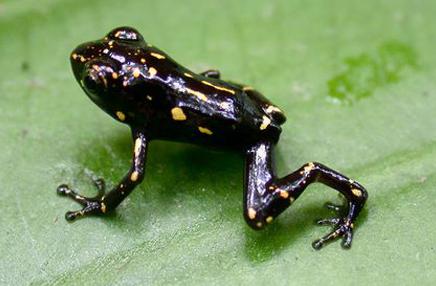 9.Mơ thấy ếch màu đen