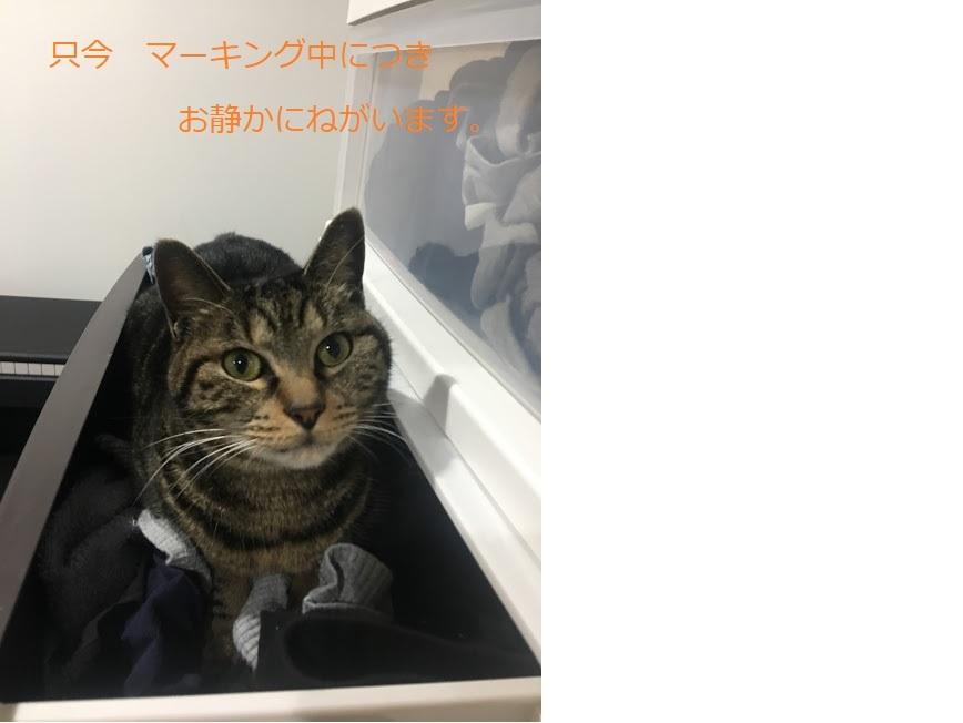 猫が服の上でくつろぐのは飼い主への愛情表現?
