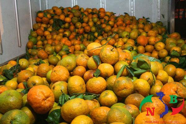 Kho lạnh bảo quản cam tươi hiệu quả cao, chất lượng tốt