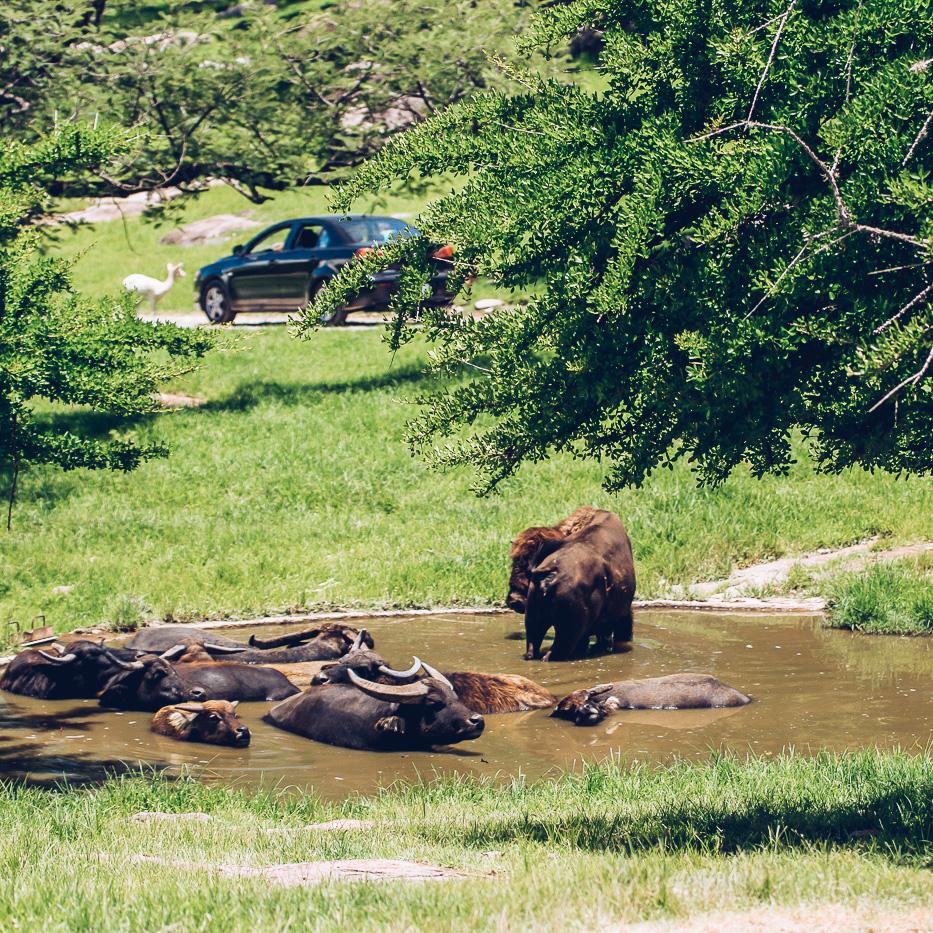 Zoofari actividades-156.jpg