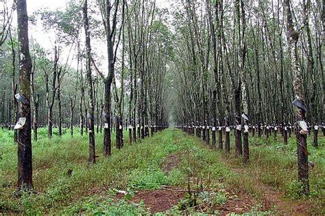 Image result for Rubber Malaya