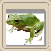 http://iqsha.cdnvideo.ru/upload/lib/logika/krugi-ejlera/frog170.png