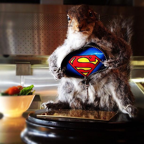 ... Super squirrel | by ...