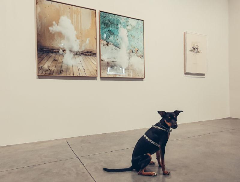 Visitar Gijón con perro