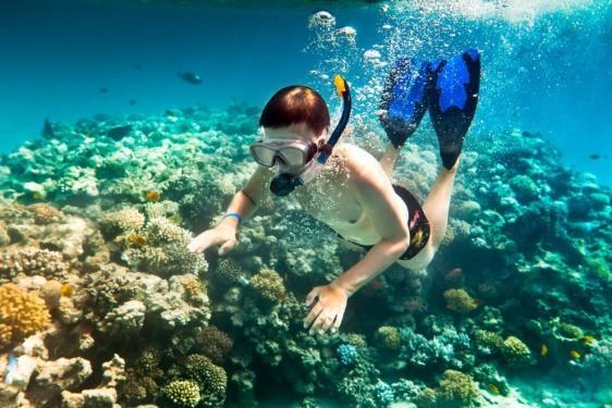 The coral reef in Cu Lao Cham