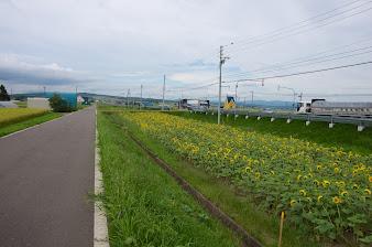 国道沿いの町道