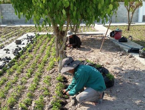 Cần tìm đến công ty chuyên trồng cỏ uy tín trên địa bàn