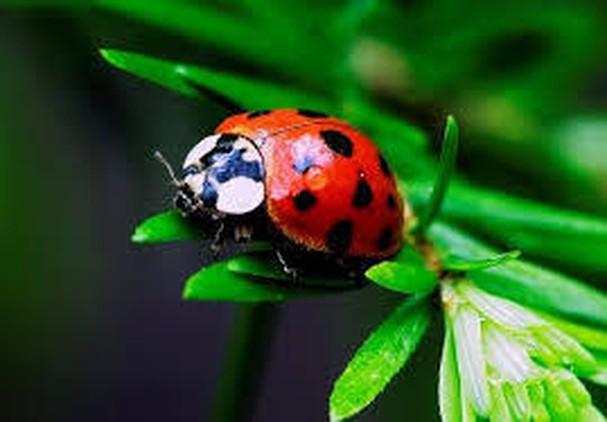 Diễn đàn rao vặt tổng hợp: Những loài côn trùng có ích bà con nông dân nên biết C2URvnsi0zMsMx9XeWcgRlvh3b8tjx6UytThpaPrO1oFw7ErMCgRXV-AFDjf3MkDg9WCN1tnkoErUP99tISOQG94Gy3sPq6KOrDida1dBw2P_fYotettD8aVjWf0GHvprbrvZ4vZ