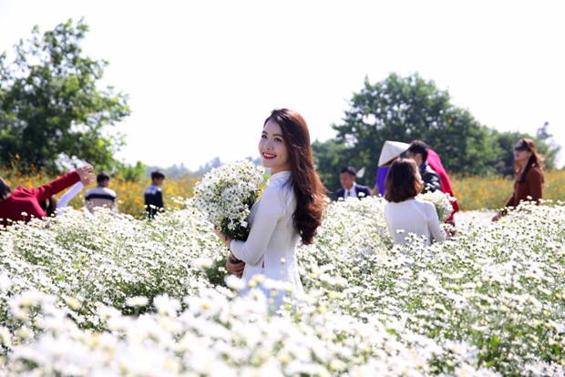 Nhiều thiếu nữ chụp ảnh bên vườn hoa cúc học mi