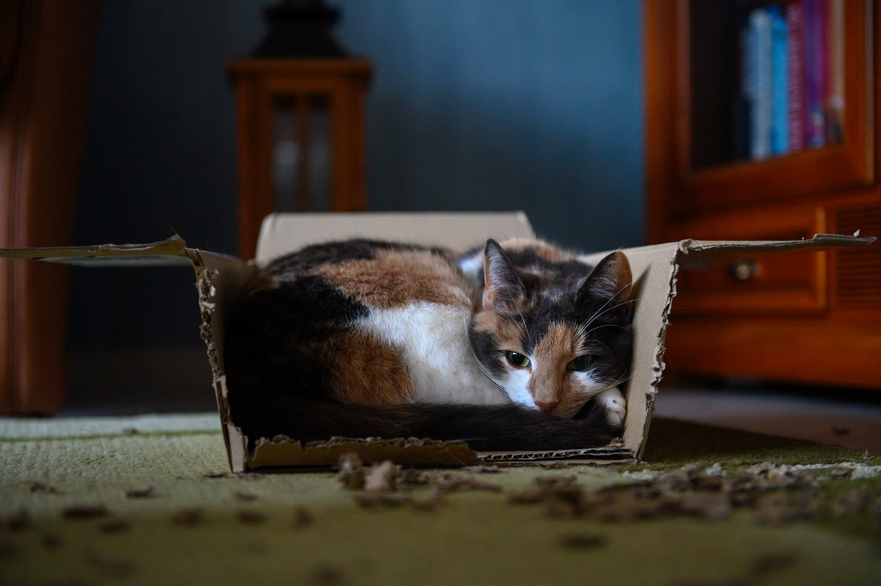 is your cat chewing or eating cardboard?