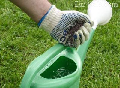 Подкормка рододендронов