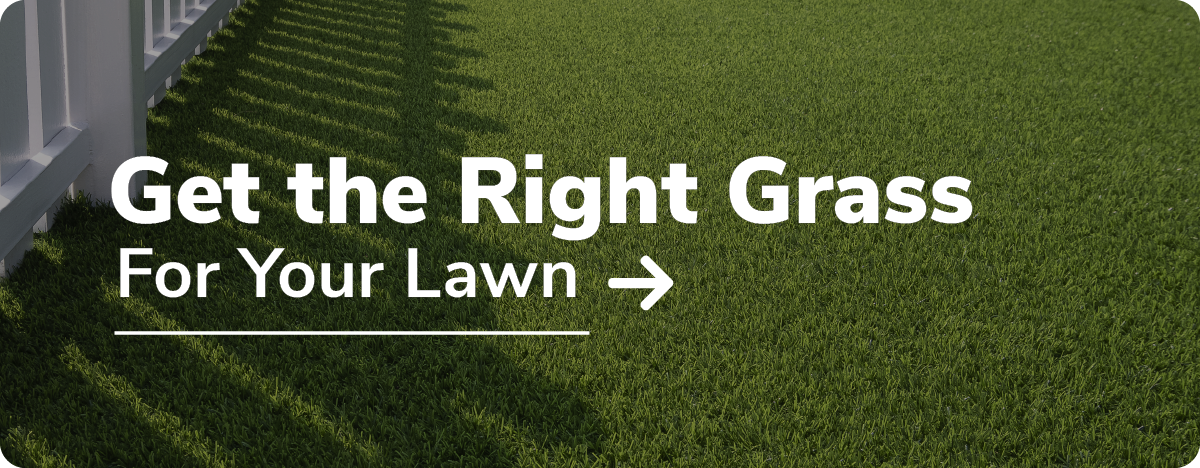 get the right grass for your lawn