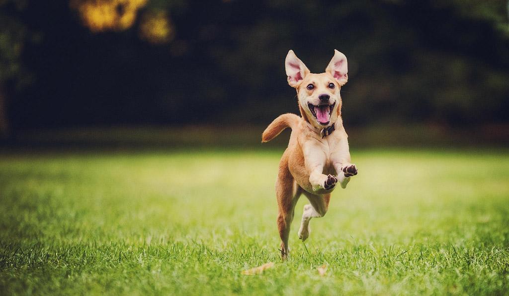puppy in park.jpg