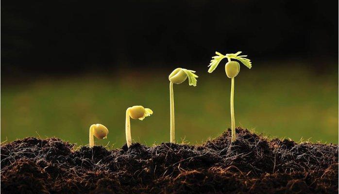 tool-seeding-con-dao-hai-luoi-va-cach-seeding-hieu-qua-khi-chay-quang-cao-facebook-1.jpg