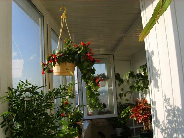 оранжерея на застекленном балконе