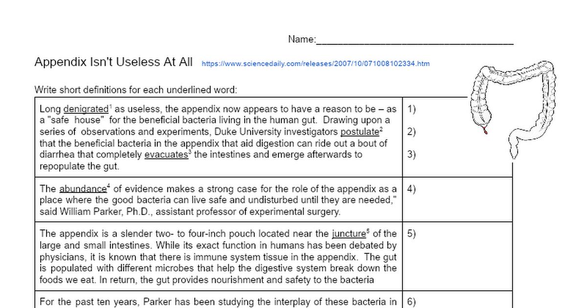 Appendix Isnt Useless At All Google Docs