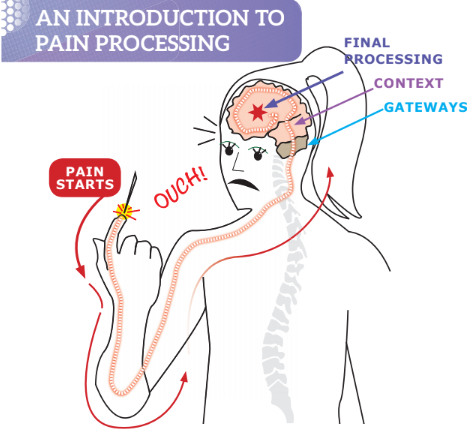when it hurts how your body and brain process pain Area of Brain Pain