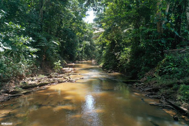Río en la Amazonía de Colombia. Foto: Rhett Butler.