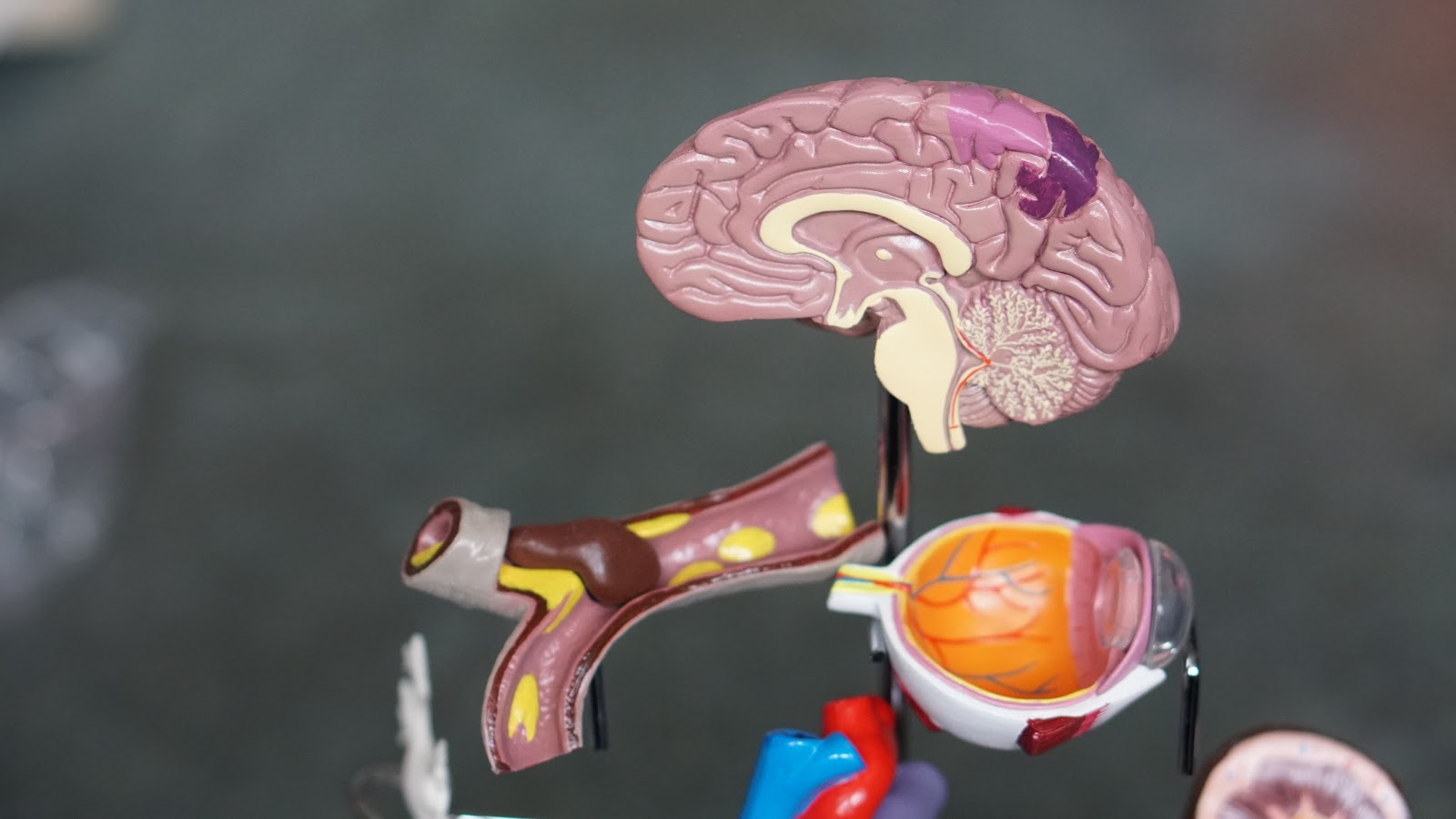 Cognitive disorders (Types, Symptoms & Treatment Options)