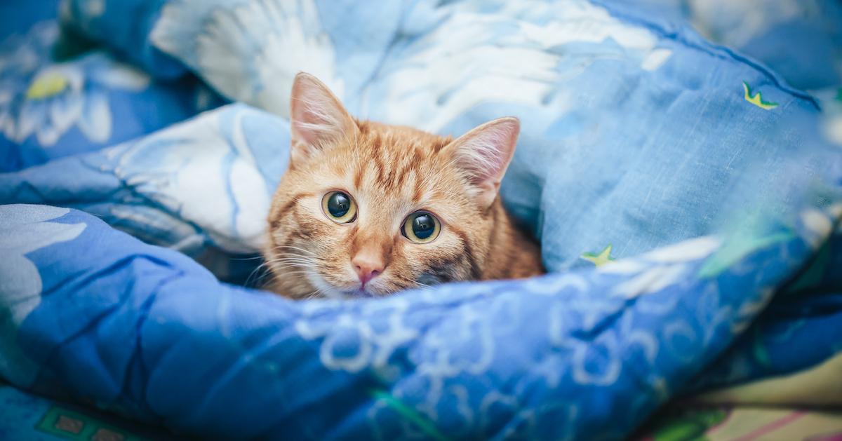 consultez un vétérinaire si le problème persiste